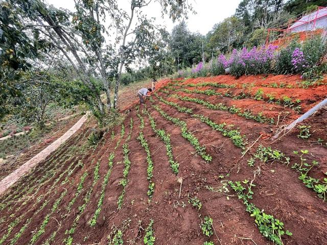Bỏ việc công sở, chàng trai 8X xây nhà gỗ, trồng hồng, làm farmstay đẹp như mơ ở Đà Lạt - Ảnh 11.