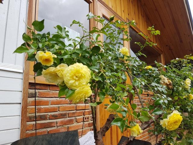 Bỏ việc công sở, chàng trai 8X xây nhà gỗ, trồng hồng, làm farmstay đẹp như mơ ở Đà Lạt - Ảnh 4.