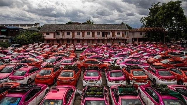 Bị bỏ không vì Covid, hàng nghìn taxi ở Thái Lan biến thành... vườn rau cứu đói tài xế - Ảnh 1.