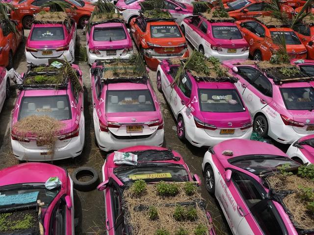 Bị bỏ không vì Covid, hàng nghìn taxi ở Thái Lan biến thành... vườn rau cứu đói tài xế - Ảnh 2.