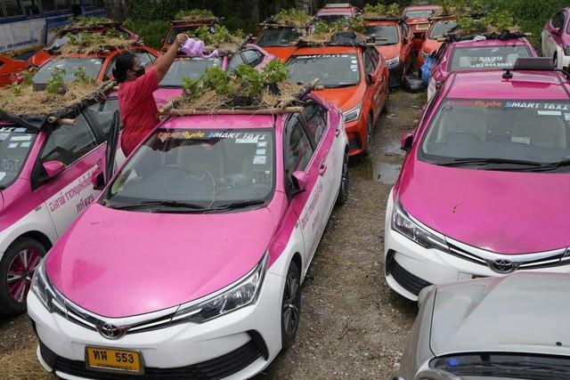 Bị bỏ không vì Covid, hàng nghìn taxi ở Thái Lan biến thành... vườn rau cứu đói tài xế - Ảnh 3.
