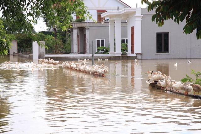 Hình ảnh chưa từng có trong tâm lụt tại Nghệ An - Ảnh 5.