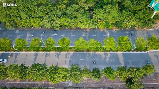 Dự án 1 triệu cây xanh do ông Nguyễn Đức Chung khởi xướng: Bất ngờ về con số thiệt hại và dàn lãnh đạo bị bắt trong hơn 2 tháng - Ảnh 1.