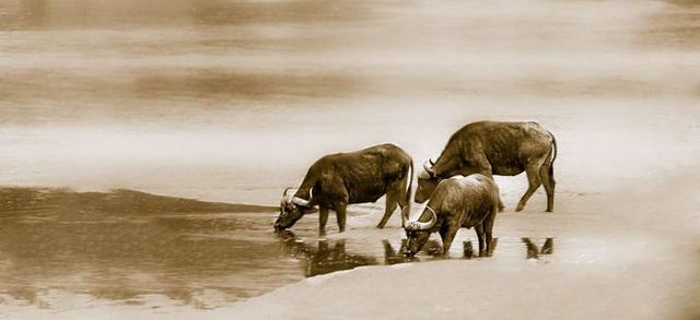 Tử vi tổng quan 12 con giáp tháng 8 âm: 2 con giáp được cát tinh chiếu rọi, 1 con giáp cẩn thận vì có hung tinh - Ảnh 2.