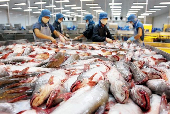 Tháng 1: Sản lượng cá tra tăng 10,5%