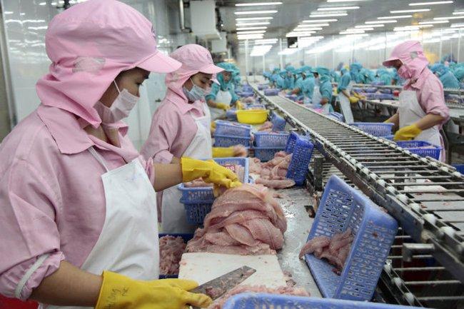 Thị trường cá tra EU giảm, Trung Quốc tăng