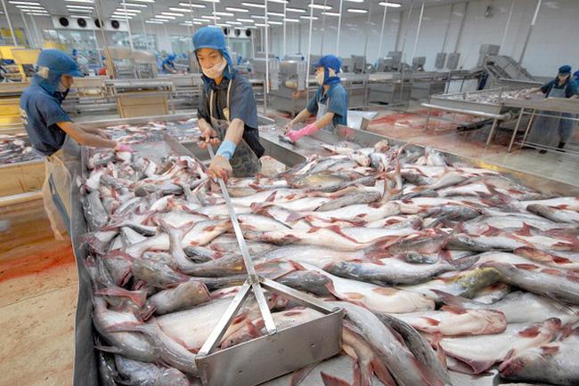 Hiệp hội Cá tra đang cân nhắc khởi kiện Mỹ ra WTO