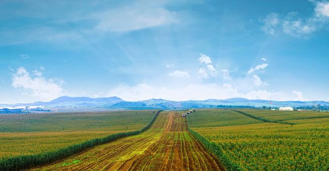 Sản xuất nông nghiệp: Hiểu thị trường, biết công nghệ, sẽ thành công