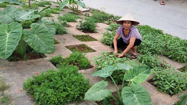 Đà Nẵng hủy dự án trồng rau của nhà đầu tư Trung Quốc