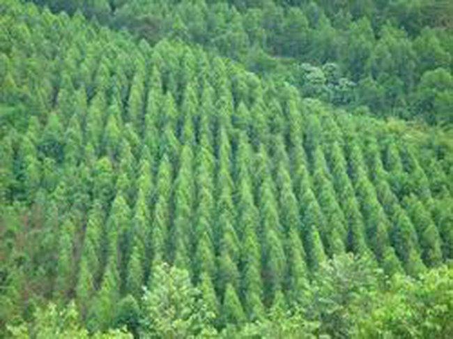 Điều chỉnh chính sách thuế để bảo vệ môi trường
