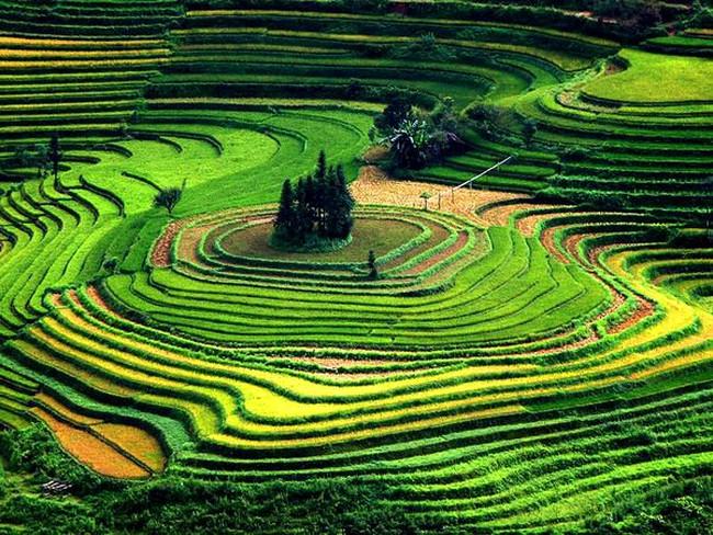 Nông nghiệp tăng trưởng?