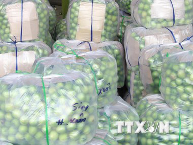 Không có việc táo xanh Ninh Thuận giá chỉ 1.000 đồng mỗi kg