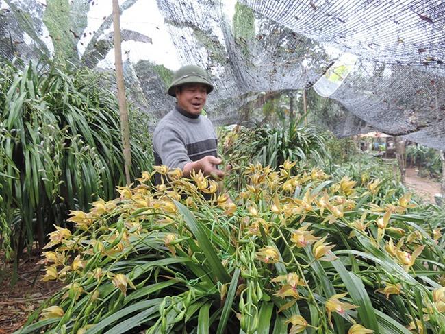 Địa lan Sa Pa có chậu trị giá gần trăm triệu đồng vẫn có khách đặt