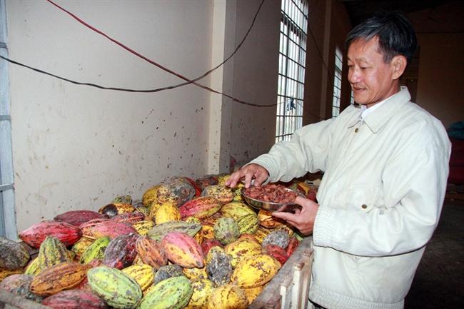 Việt Nam vào nhóm những nước có ca cao hương vị tốt