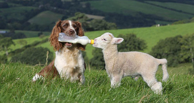 """Chuyện voucher hết hạn ở The Coffee House và chiến lược """"chuyển giết cừu ăn thịt sang nuôi cừu lấy lông"""""""