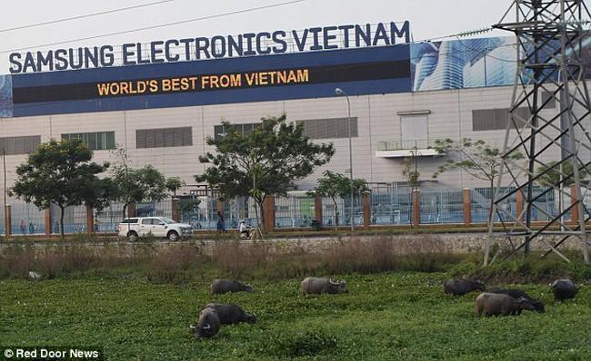 Samsung ngừng sản xuất Note 7, công nhân Việt Nam ra sao?