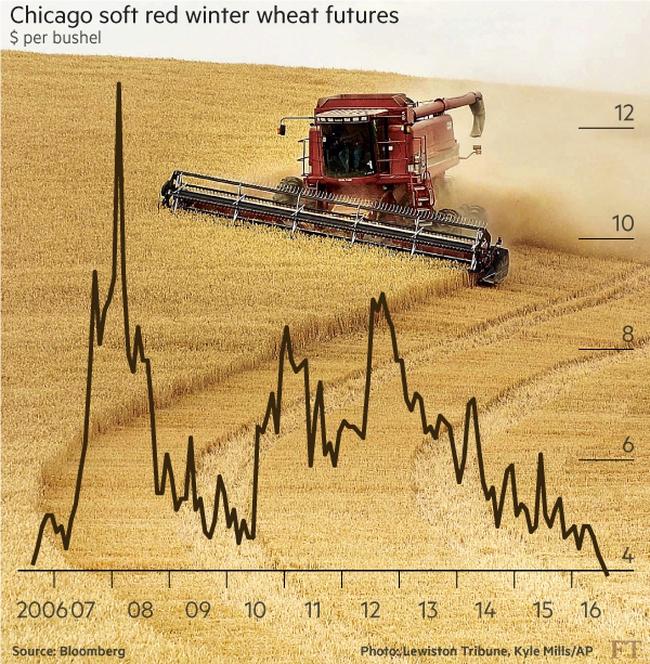 Giá lúa mỳ thấp nhất trong 10 năm