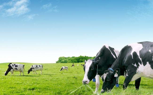 Đưa giám đốc phát triển vùng nguyên liệu làm CEO GTNfoods, Vinamilk khẳng định sẽ giúp Mộc Châu Milk phát triển trang trại bò sữa ứng dụng công nghệ cao