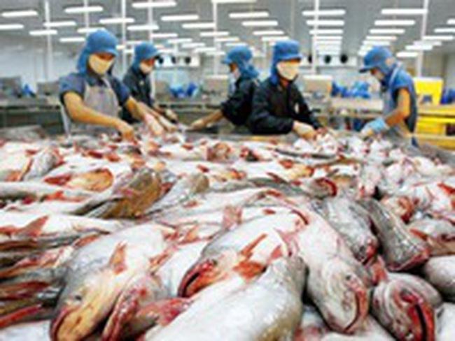 Doanh nghiệp vẫn lo lắng dù xuất khẩu cá tra tăng