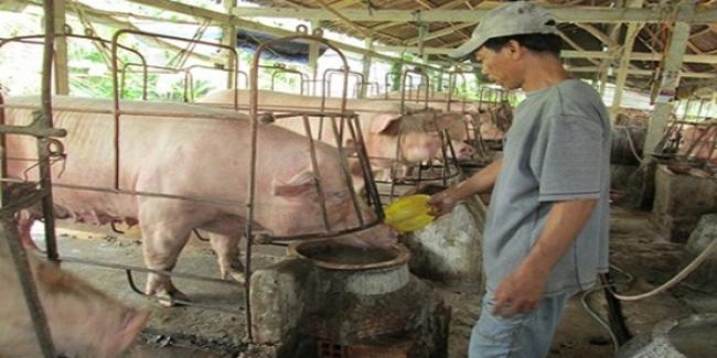 Người chăn nuôi đừng kỳ vọng vào thị trường Trung Quốc, kẻo lỗ nặng!
