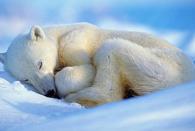 Cổ phiếu SHB bừng tỉnh sau giấc ngủ đông dài?