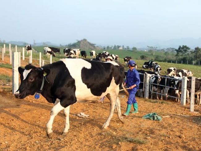 Gần 120 nhà đầu tư mua hết sạch cổ phần đấu giá của Tổng Công ty Chăn nuôi Việt Nam