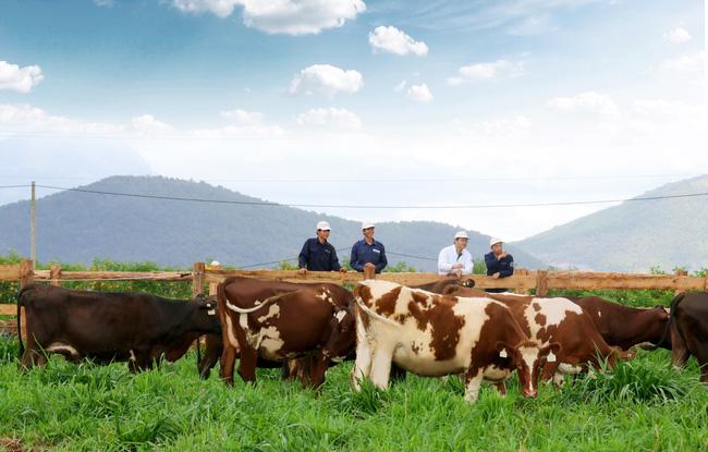 Vinamilk chuẩn bị khánh thành trang trại bò sữa Organic chuẩn Châu Âu đầu tiên tại Việt Nam