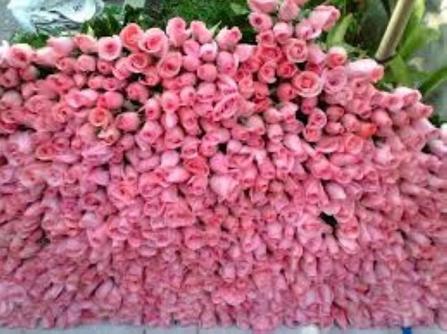 Thương lái thao túng giá hoa