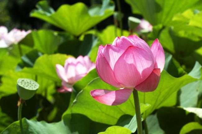 """22 lời khuyên """"quý giá tựa vàng ngọc"""" của Phật giáo thiền tông giúp bạn bình ổn tâm trí"""