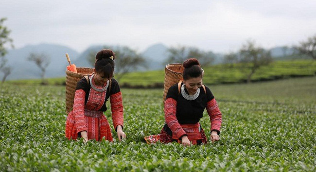 Vinatea và chiến lược mới cho trà Việt