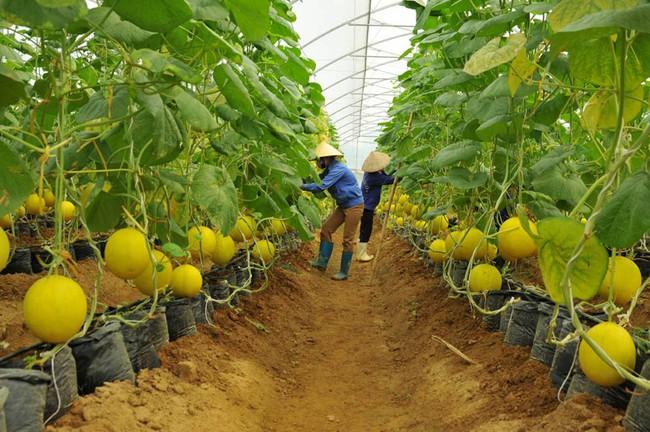 """Gỡ """"nút thắt"""" về vốn cho nông nghiệp công nghệ cao tại Việt Nam"""
