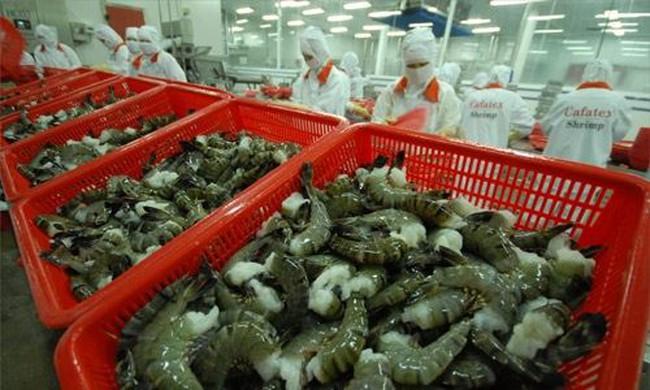 Con tôm mang về cho Việt Nam 1 tỉ USD