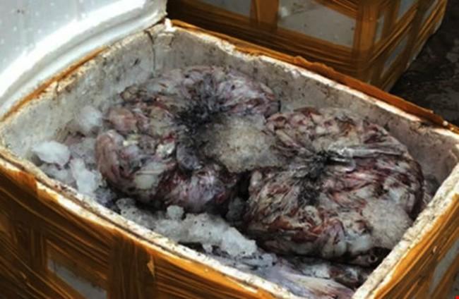 Bắt hơn 1 tấn cá, mực thối chuẩn bị vào TP.HCM tiêu thụ