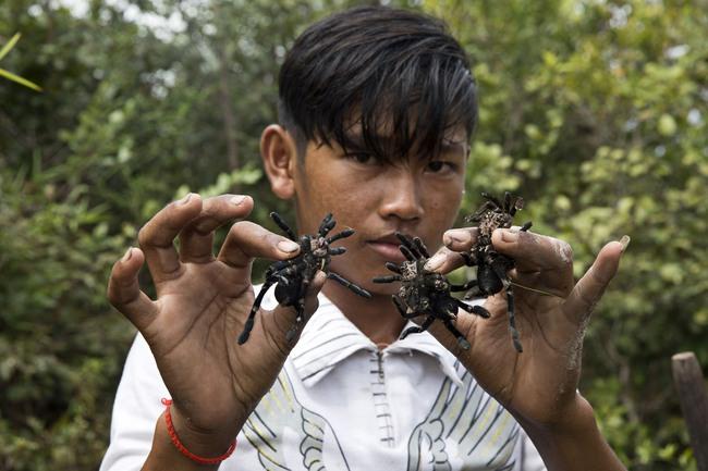 Không chỉ reo rắc nỗi khiếp sợ, nhện khổng lồ mang lại kế sinh nhai độc đáo ở Campuchia