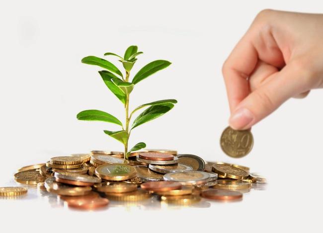 Phú Tài đầu tư 120 - 130 tỷ vào Nhà máy chế biến gỗ Phù Cát