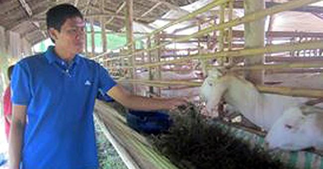 Giá dê tăng cao người nuôi ồ ạt tăng đàn