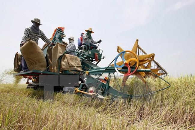 Thái Lan công bố chương trình trợ cấp lúa gạo mới cho nông dân