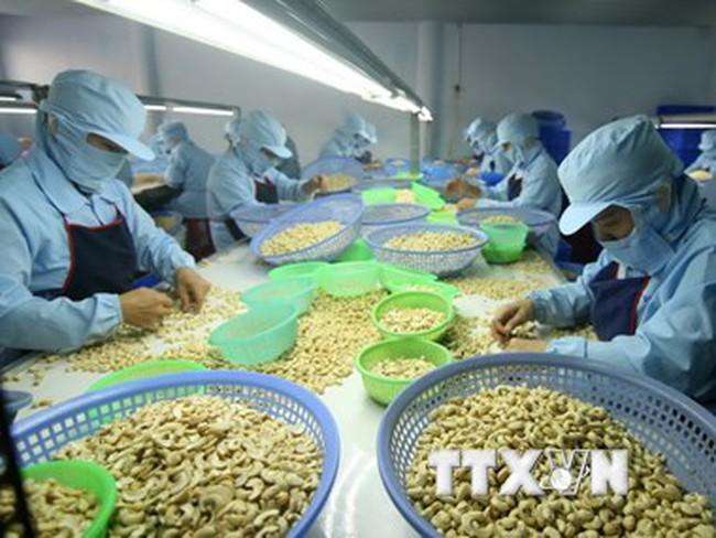 Kỳ vọng tăng xuất khẩu hạt điều sau chuyến thăm của ông Obama