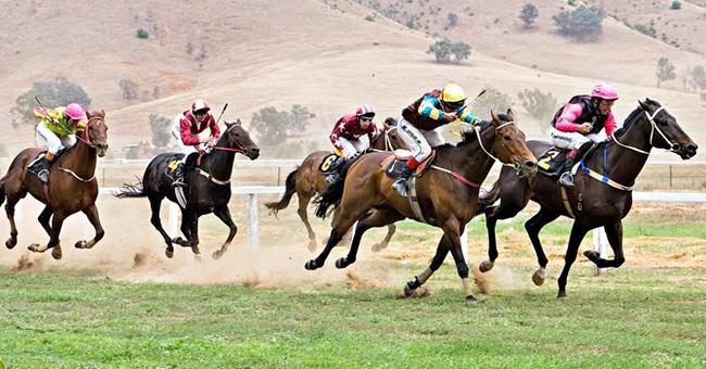 Quy định về kinh doanh đặt cược đua ngựa, đua chó và bóng đá quốc tế