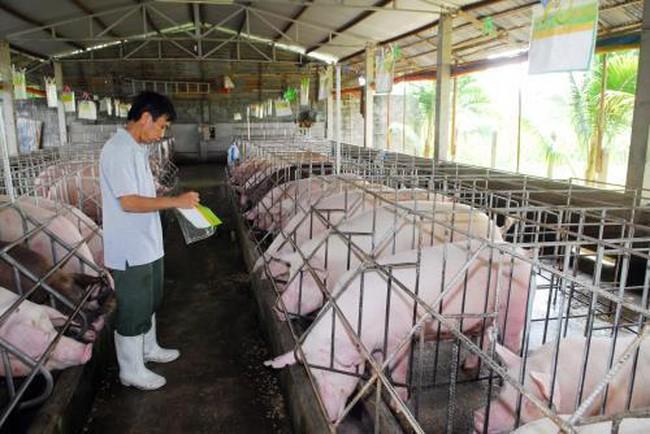 Giá lợn hơi tại Đồng Nai đang nhích lên