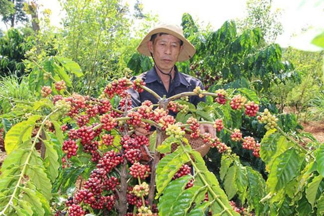 Lợi nhuận cà phê, nước ngoài hưởng