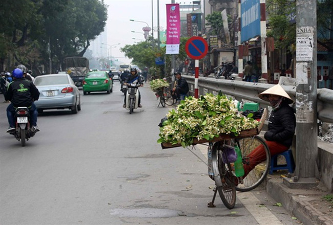 [Ảnh]: Mùa hoa bưởi về, 'phủ trắng' khắp các phố phường Hà Nội