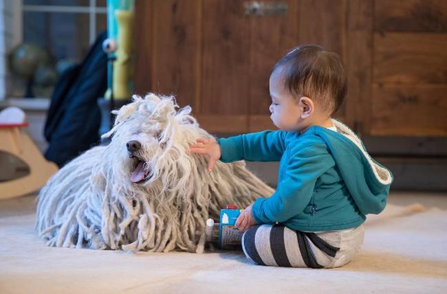 """Những chú chó cưng """"quyền lực"""" nhất làng công nghệ thế giới"""