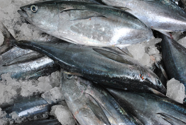 Cá ngừ Việt xuất sang Nhật muốn thuế 0% như Thái Lan