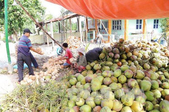 Mít, dừa khô miền Tây được giá