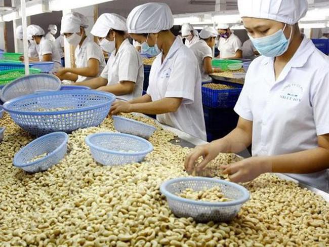 12 năm liên tiếp Việt Nam đứng đầu thế giới về chế biến, xuất khẩu điều nhân
