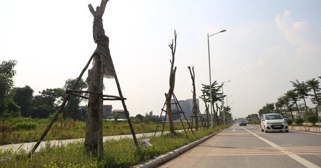 Hàng loạt cây xanh tiếp tục chết sau khi trồng lại ở con đường nghìn tỉ