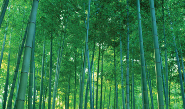 Bamboo Capital đầu tư mạnh vào tài chính, năm 2016 lãi ròng gần 64 tỷ đồng