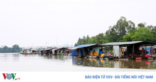 Nguy cơ xóa sổ làng cá bè trên sông Đồng Nai