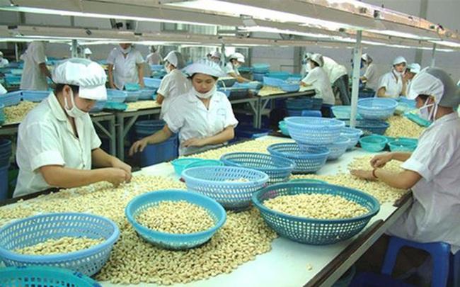 Ngành điều và nghịch lý nhập khẩu nguyên liệu để chế biến